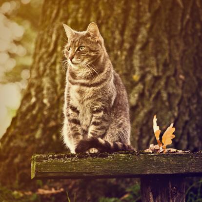Mixed-Breed Cat「Autumn portrait of a cute cat」:スマホ壁紙(10)