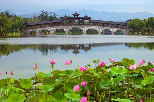 Water Lily「Qinhuangdao in hebei province nandaihe ecological garden」:スマホ壁紙(1)