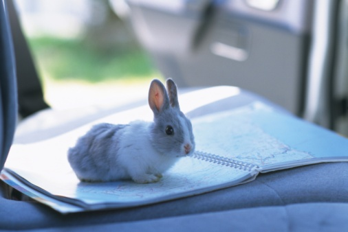 うさぎ「A Little Rabbit Sitting on a Map Inside a Car, Looking at Camera, Side View, Differential Focus」:スマホ壁紙(13)