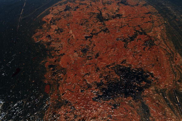 Sea Life「Gulf Oil Spill Spreads, Damaging Economies, Nature, And Way Of Life」:写真・画像(16)[壁紙.com]