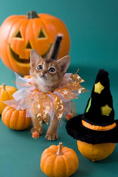 Abyssinian Kitten and Halloween:スマホ壁紙(壁紙.com)
