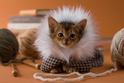 子猫「Abyssinian Kitten and Knitting Yarn」:スマホ壁紙(2)