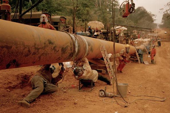 Tropical Rainforest「Exxon Mobil's Chad / Cameroon oil pipeline」:写真・画像(5)[壁紙.com]