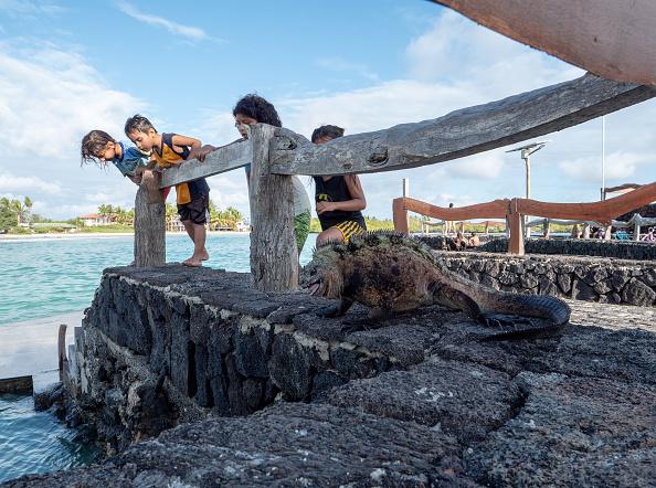 世界遺産「Nature and Human Lives Seek Equilibrium In Galapagos」:写真・画像(15)[壁紙.com]