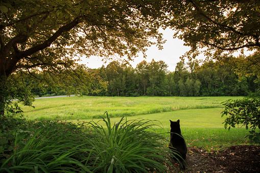 Pawed Mammal「Lone Cat watching over Back Yard」:スマホ壁紙(6)
