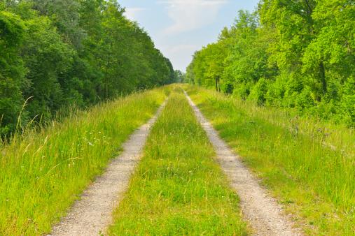 Country Road「Dirt Road」:スマホ壁紙(11)