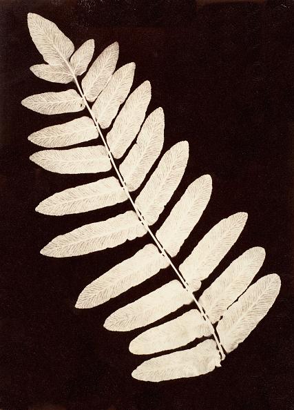Specimen Holder「Botanical Specimen: Fern」:写真・画像(18)[壁紙.com]