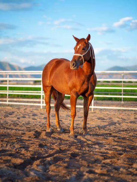 Horse on a Ranch:スマホ壁紙(壁紙.com)