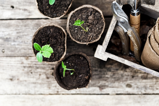 Planting「Seedling ready to be planted in the garden」:スマホ壁紙(6)