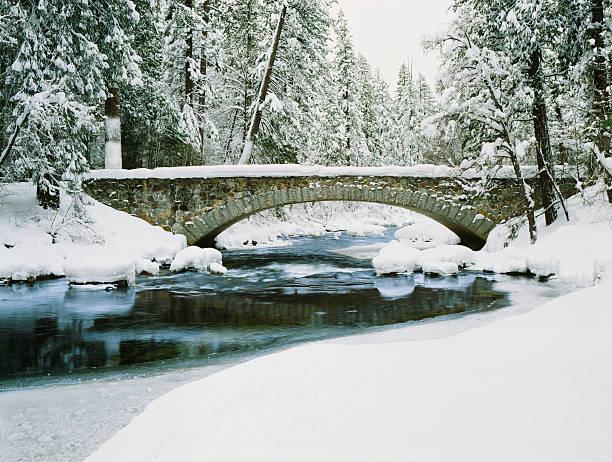 Fresh Winter snow laden pine trees along the Merced River:スマホ壁紙(壁紙.com)