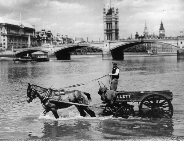 Cool Attitude「Horse in Thames」:写真・画像(11)[壁紙.com]