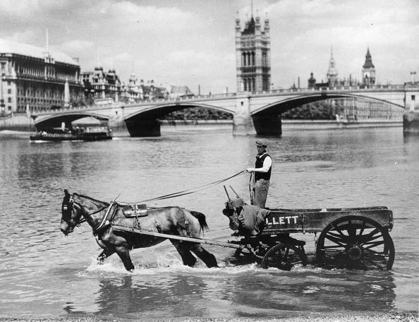 Cool Attitude「Horse in Thames」:写真・画像(10)[壁紙.com]