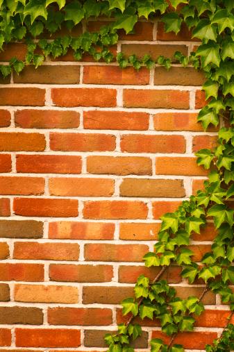 Ivy「Vines on Brick Wall」:スマホ壁紙(15)