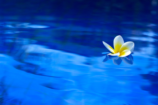 プルメリア「花のプール」:スマホ壁紙(1)