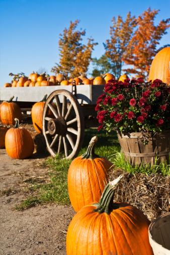 Agricultural Fair「Autumn Pumpkin」:スマホ壁紙(12)