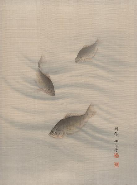 Topics「Fishes Swimming」:写真・画像(4)[壁紙.com]