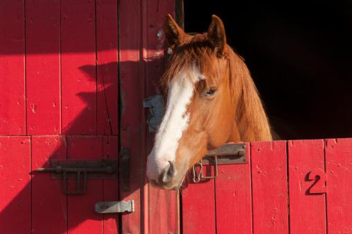 Horse「Horse in red barn」:スマホ壁紙(6)