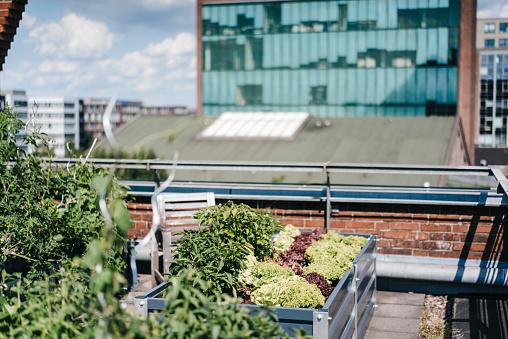 Gardening「Germany, Duisburg, Urban rooftop garden」:スマホ壁紙(14)