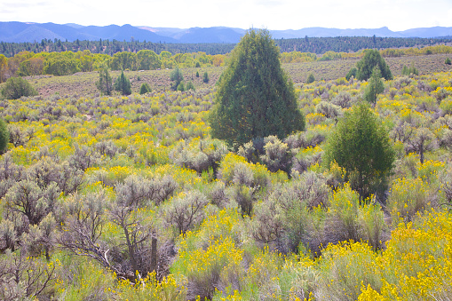 Flower「Field of yellow, green and black desert flowers and shrubs」:スマホ壁紙(5)
