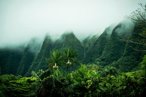 Oahu「Tropical scenery, Kaneohe, Oahu, Hawaii Islands, USA」:スマホ壁紙(3)