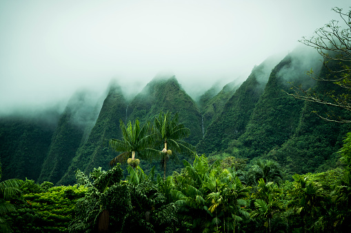 Fog「Tropical scenery, Kaneohe, Oahu, Hawaii Islands, USA」:スマホ壁紙(10)