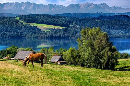 Horse「Summer scene with Czorsztyn lake and Tatra Mountains landscape, Poland」:スマホ壁紙(0)