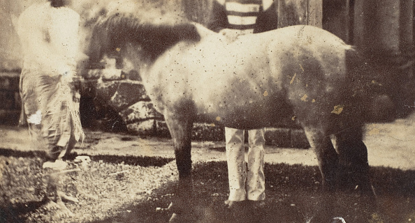 Photograph「My Pegu Pony」:写真・画像(18)[壁紙.com]