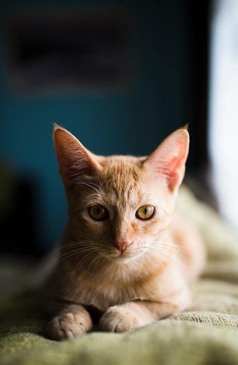 トラ猫「Cat on the top of a couch at home」:スマホ壁紙(19)