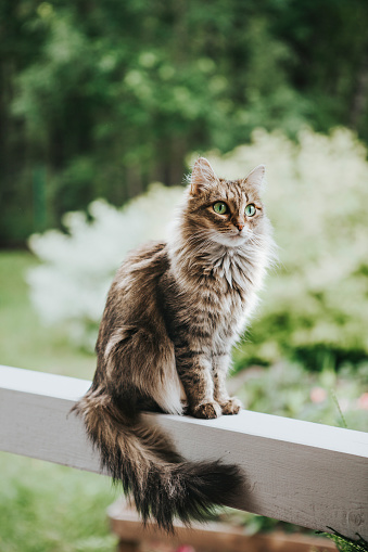 Weekend Activities「Cat on the terrace」:スマホ壁紙(10)