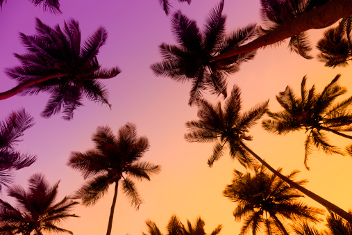 Sunset sea「Tropical coconut trees at sunset」:スマホ壁紙(0)