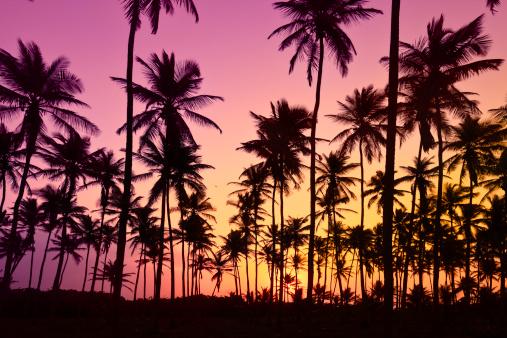 南国「夕暮れ時のトロピカルココナッツの木」:スマホ壁紙(13)