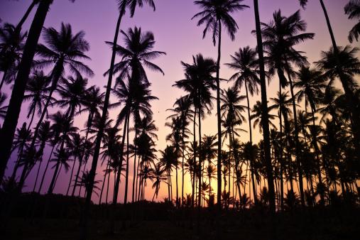 夕焼け 海「のトロピカルココナッツの木の日の出」:スマホ壁紙(18)
