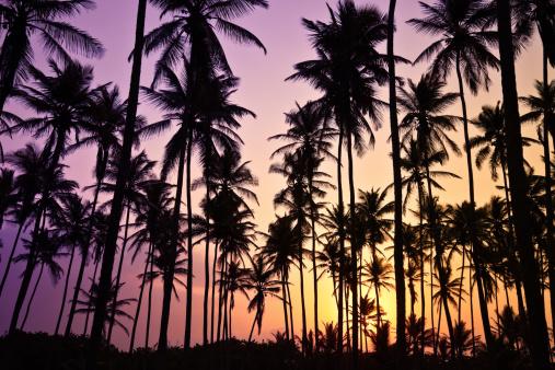 夕焼け 海「のトロピカルココナッツの木の日の出」:スマホ壁紙(16)