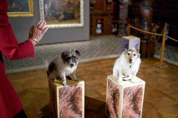 動物「Duke and Duchess of Devonshire Present Chatsworth 2019 Sculpture Exhibition」:写真・画像(18)[壁紙.com]
