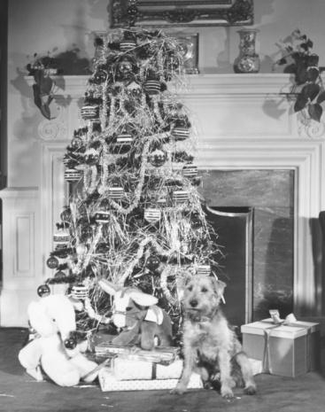 Stuffed Animals「Dog sitting at Christmas tree, (B&W)」:スマホ壁紙(17)