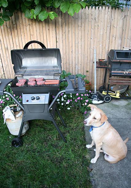 Dog Sitting at Barbecue:スマホ壁紙(壁紙.com)