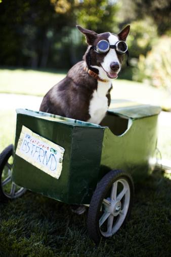 Flying Goggles「A dog sitting in a go-kart.」:スマホ壁紙(6)