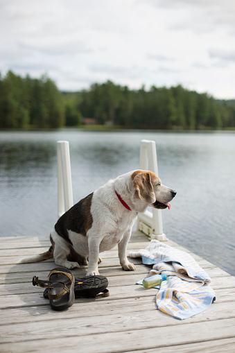 Adirondack Mountains「Dog Sitting On The Wooden Dock Alongside Lake In Adirondack」:スマホ壁紙(11)