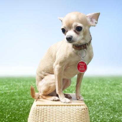 Animal Whisker「Dog sitting on basket」:スマホ壁紙(13)