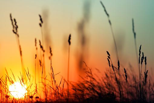 花畑「夕日とグラス」:スマホ壁紙(10)