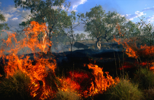 Deforestation「Bushfire burning, Northern Territory, Australia, Australasia」:スマホ壁紙(5)