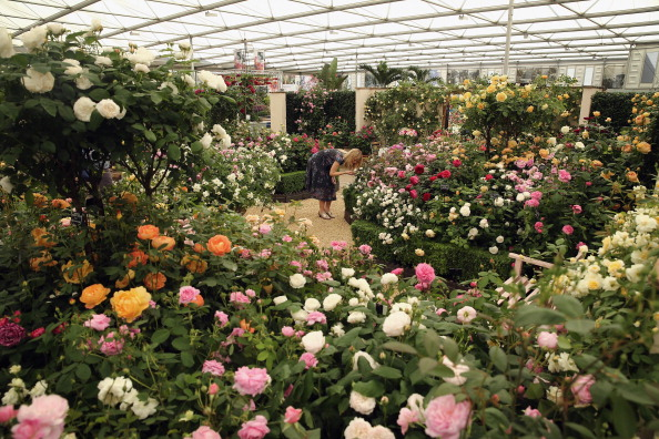 薔薇「Chelsea Flower Show 2014 - Press Day」:写真・画像(14)[壁紙.com]