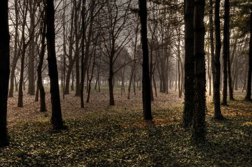 Copse「Park with Leafless Trees. Color Image. Hdr」:スマホ壁紙(5)