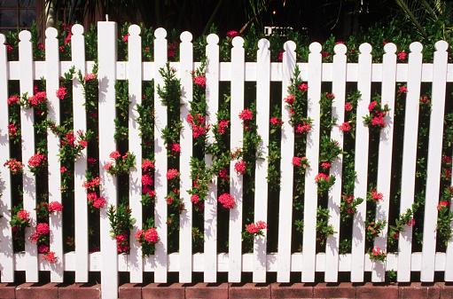 1980-1989「Garden Fence With Orange Flowers」:スマホ壁紙(3)