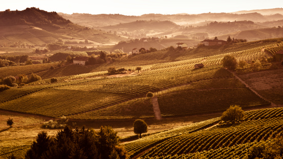 Piedmont - Italy「Hills at sunset with vineyards and trees」:スマホ壁紙(12)