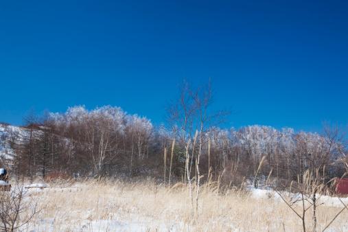 Japanese pampas grass「Yashimagahara swamp in winter, Nagano Prefecture, Honshu, Japan」:スマホ壁紙(3)