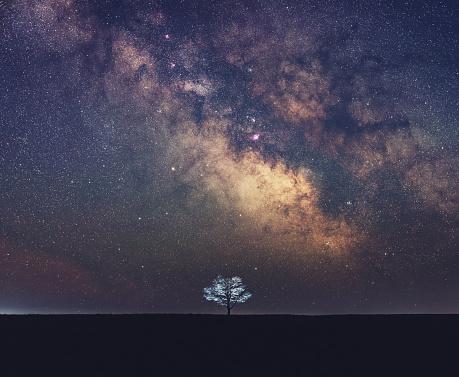 Single Tree「Galactic Solitude」:スマホ壁紙(6)