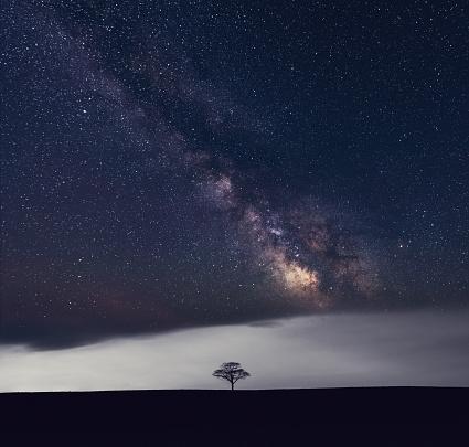 Single Tree「Galactic Solitude」:スマホ壁紙(3)