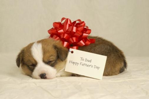 父の日「Puppy wearing a red bow」:スマホ壁紙(13)