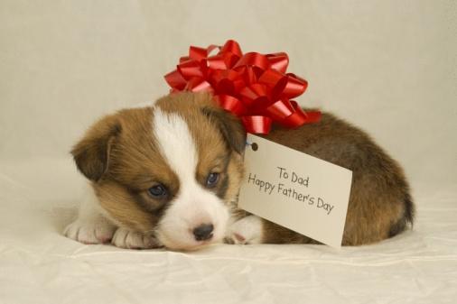 父の日「Puppy wearing a red bow」:スマホ壁紙(12)